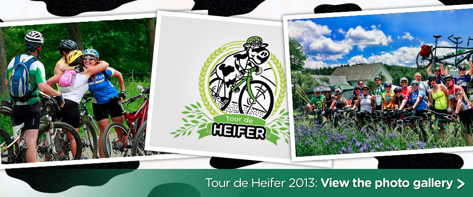 Tour de Heifer 2013: a photo gallery
