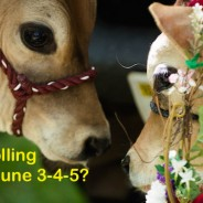Join us for the Stroll, June 3-4-5