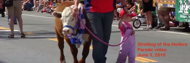 Watch video of the June 4 Strolling of the Heifers Parade