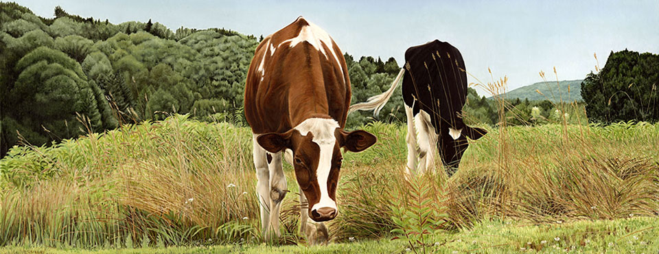 Large Inquisitive CowsBanner