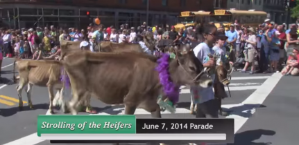 2014 Strolling of the Heifers Parade