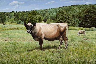Black faced Brown cow